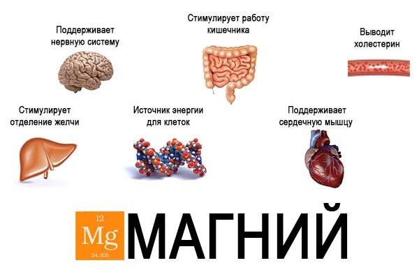 Основные функции магния
